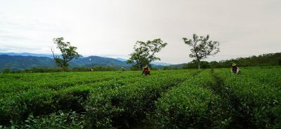 Trailer – Tea Mountain: A Life Steeped in Gratitude